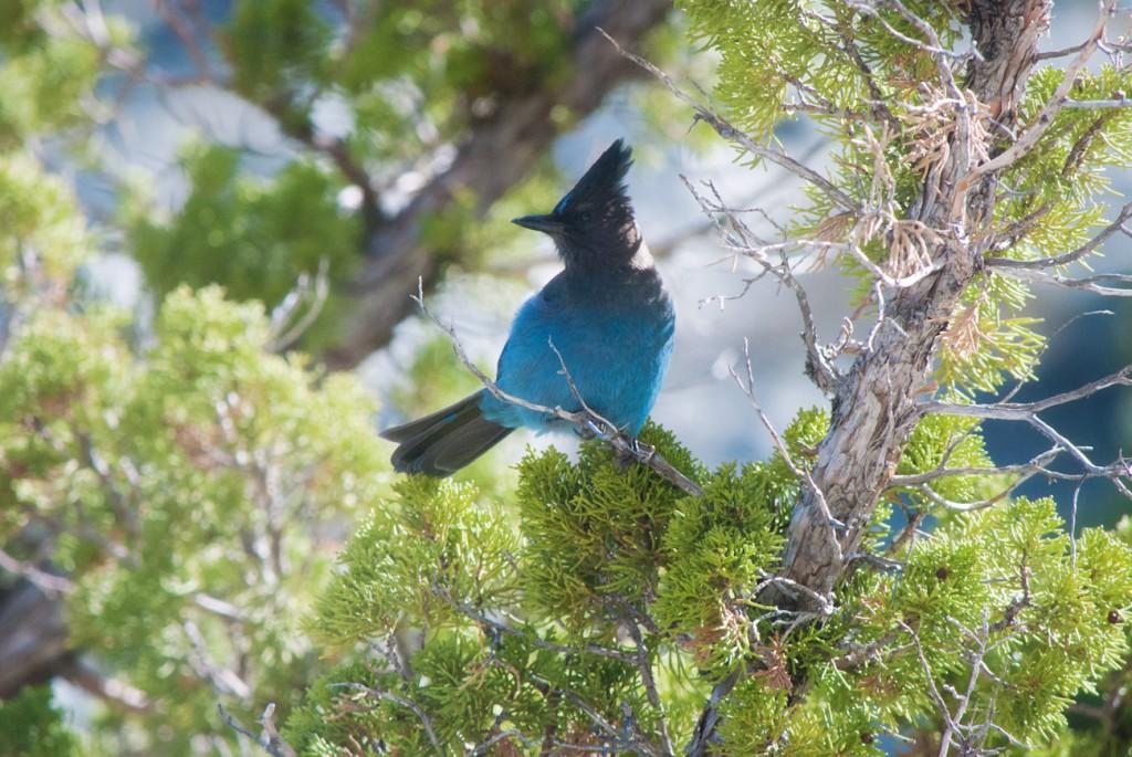 california-birds-6