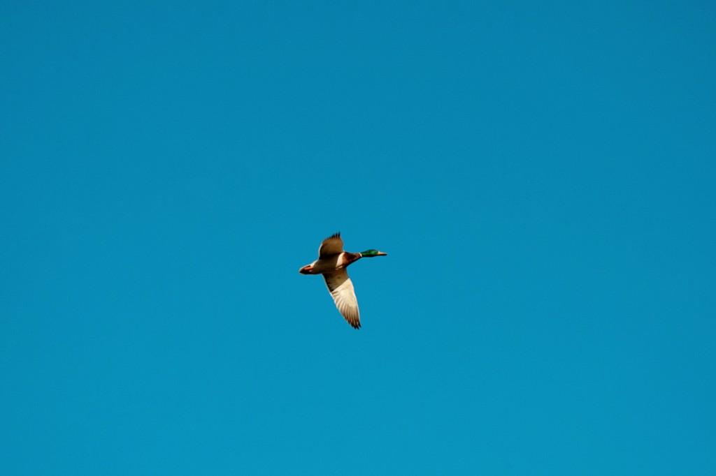 california-birds-7