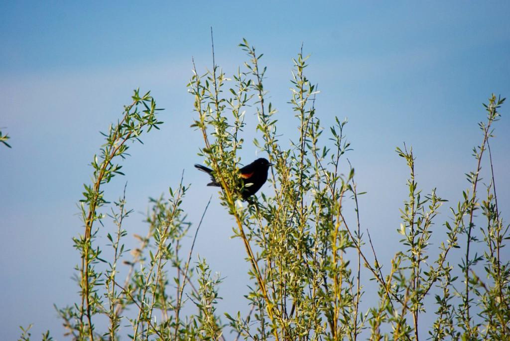 california-birds-8