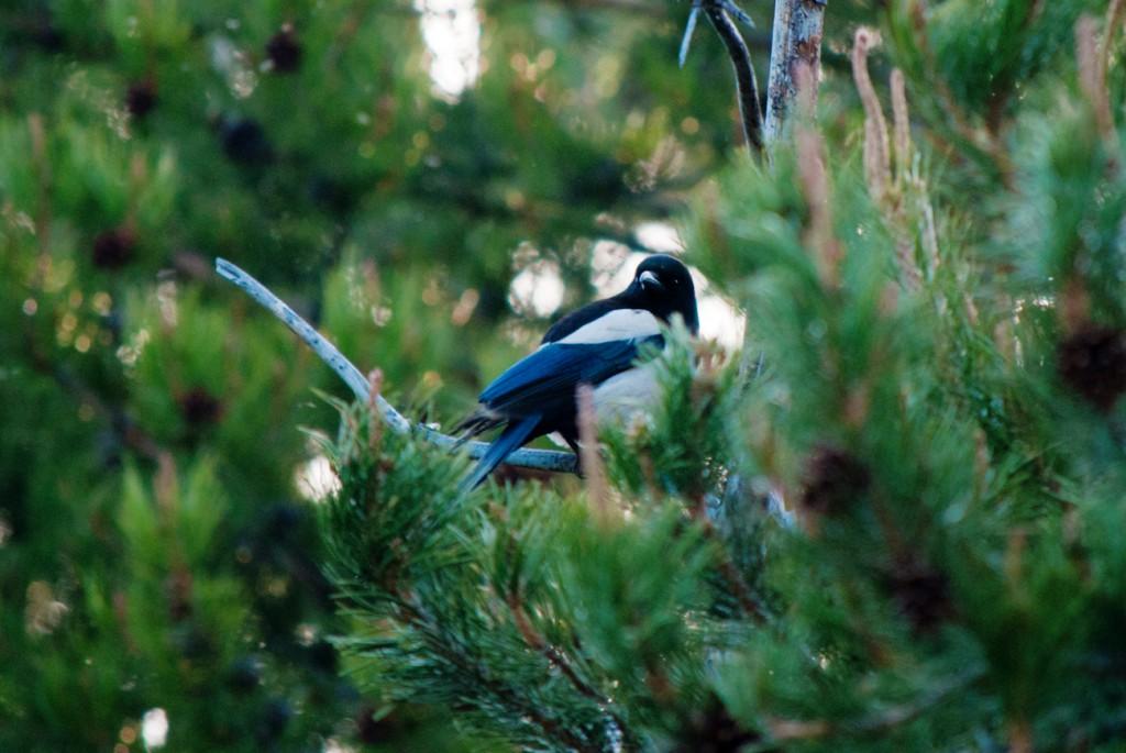california-birds-9