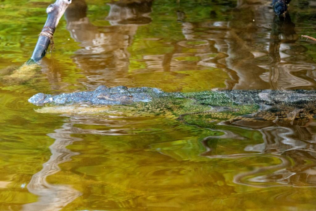 rio-lagartos-11