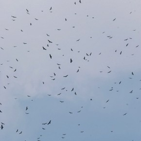85,000 birds in the sky - the River of Raptors