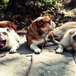 Yawn, Snub, and Sigh